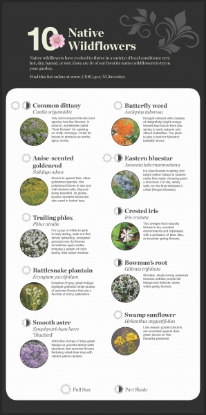 Native Wildflower recommendations