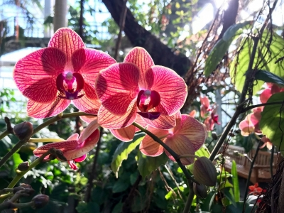 Orchid shines in sunlight amongst tropical plants